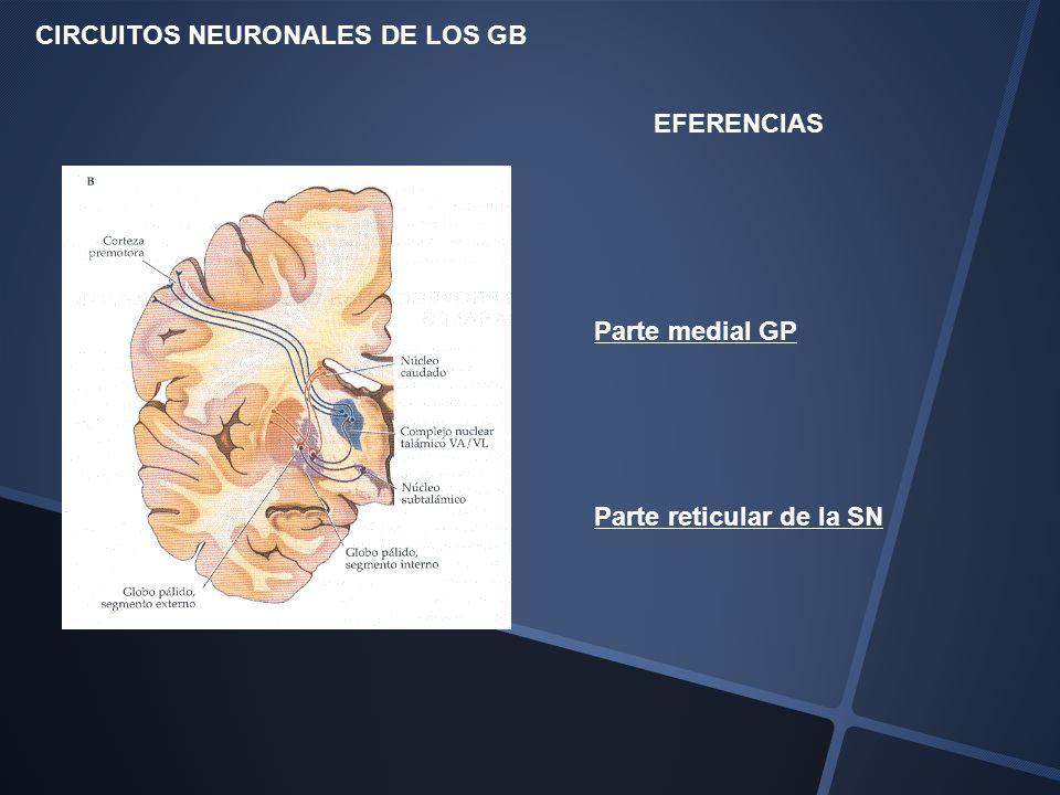 CIRCUITOS NEURONALES DE LOS GB