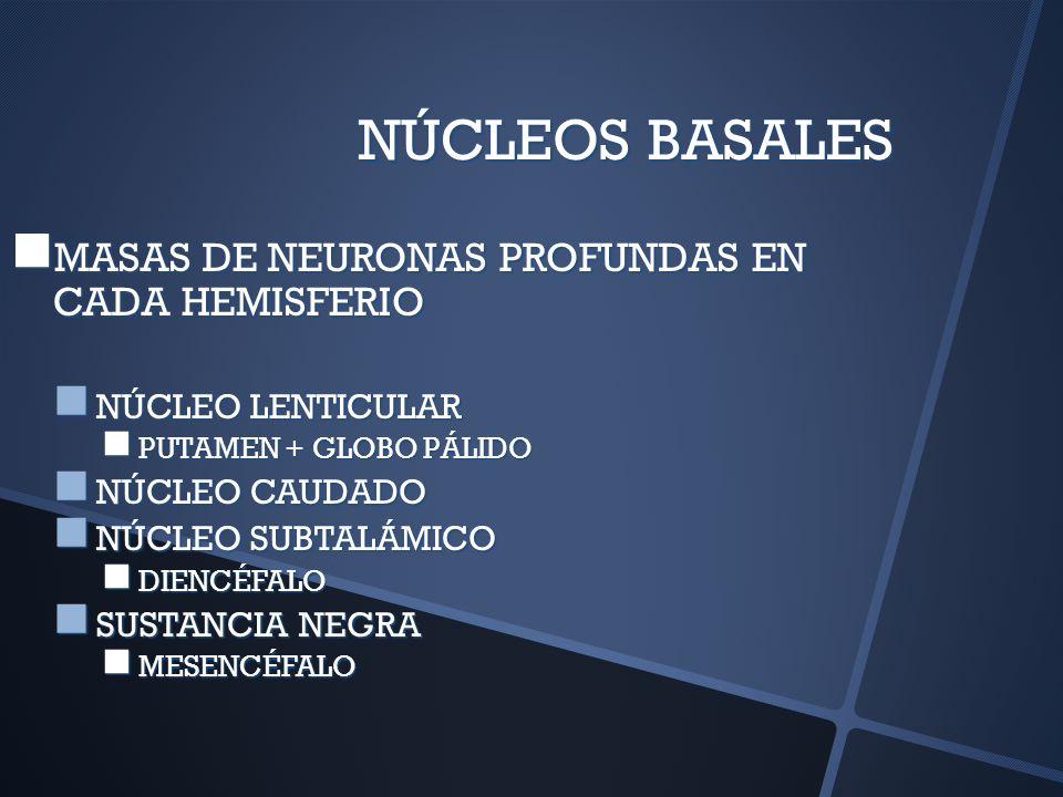 NÚCLEOS BASALES MASAS DE NEURONAS PROFUNDAS EN CADA HEMISFERIO