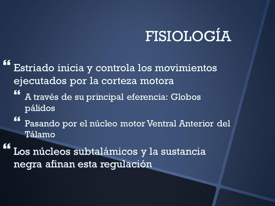 FISIOLOGÍA Estriado inicia y controla los movimientos ejecutados por la corteza motora. A través de su principal eferencia: Globos pálidos.