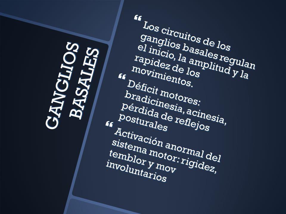 Los circuitos de los ganglios basales regulan el inicio, la amplitud y la rapidez de los movimientos.