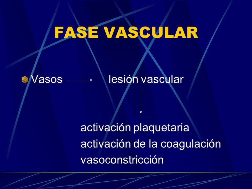 FASE VASCULAR Vasos lesión vascular activación plaquetaria