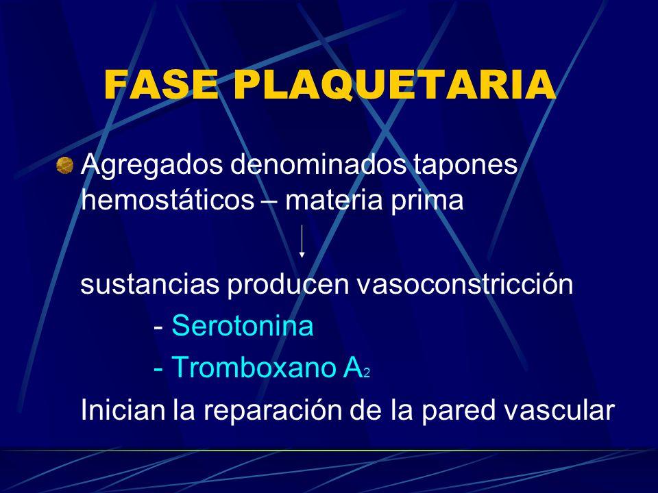 FASE PLAQUETARIA Agregados denominados tapones hemostáticos – materia prima. sustancias producen vasoconstricción.
