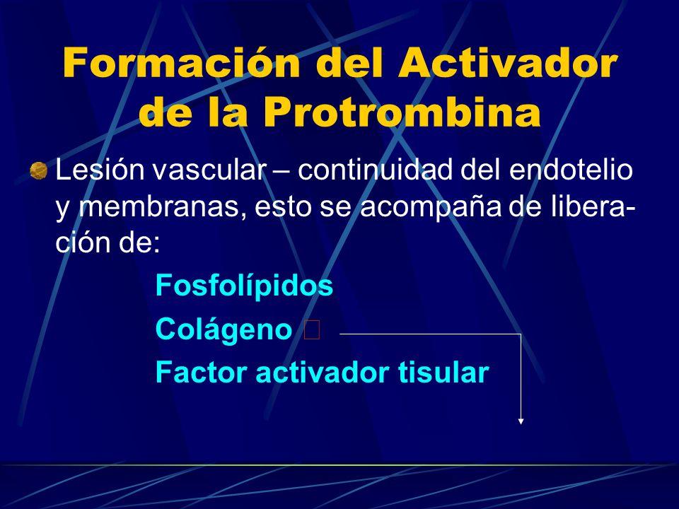 Formación del Activador de la Protrombina