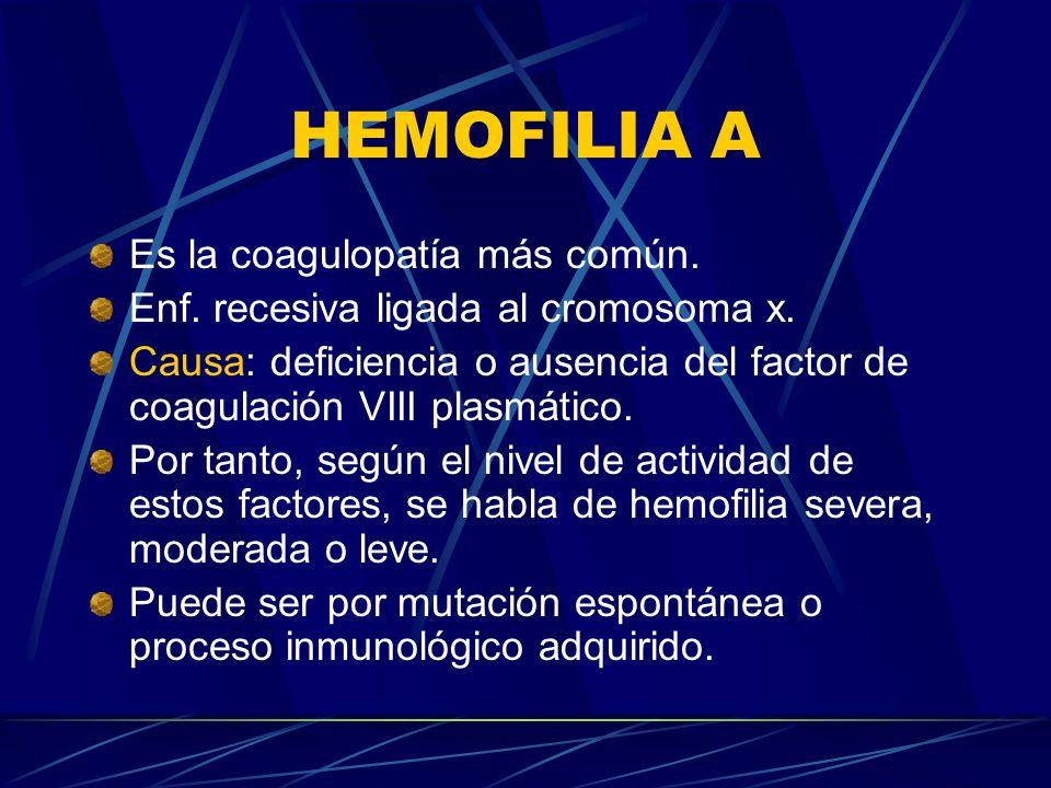 HEMOFILIA A Es la coagulopatía más común.