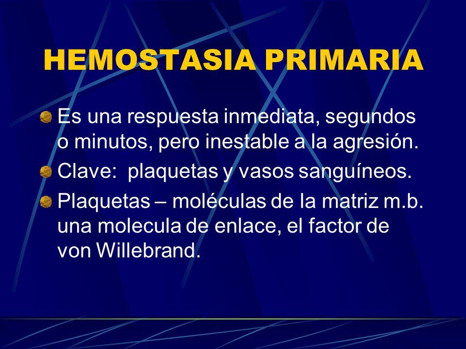 HEMOSTASIA PRIMARIA Es una respuesta inmediata, segundos o minutos, pero inestable a la agresión. Clave: plaquetas y vasos sanguíneos.