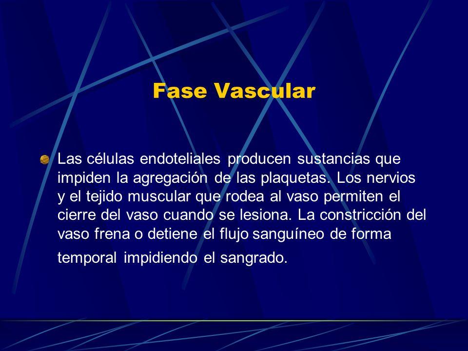 Fase Vascular