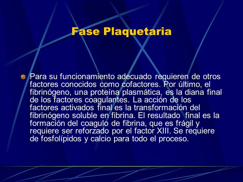 Fase Plaquetaria