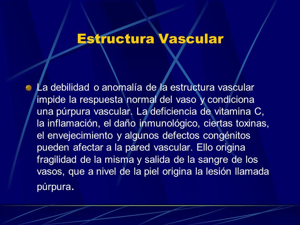 Estructura Vascular