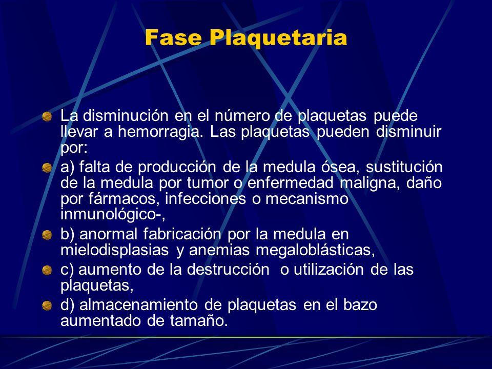 Fase Plaquetaria La disminución en el número de plaquetas puede llevar a hemorragia. Las plaquetas pueden disminuir por: