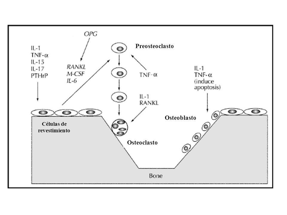 Células de revestimiento