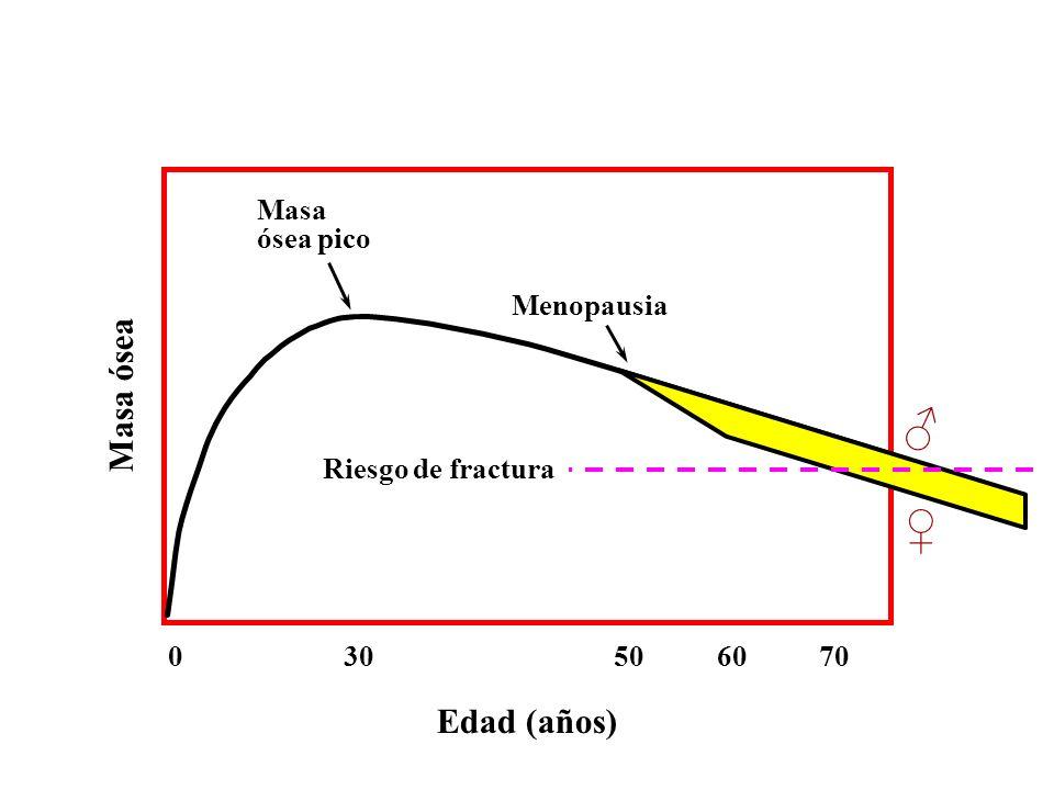 ♂ ♀ Masa ósea Edad (años) Masa ósea pico Menopausia Riesgo de fractura
