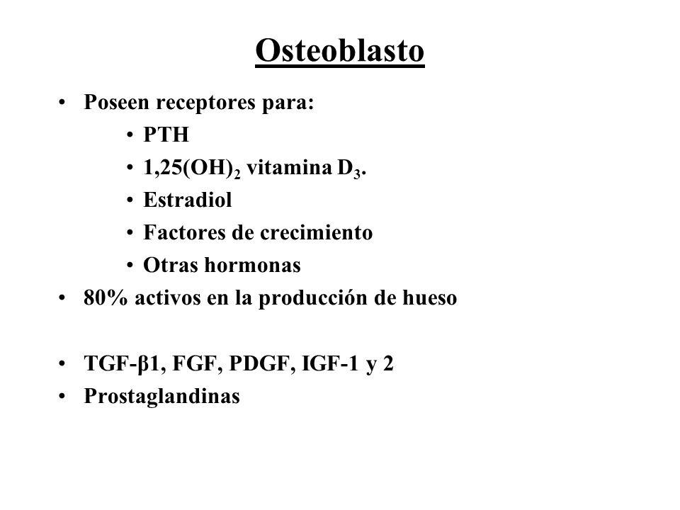 Osteoblasto Poseen receptores para: PTH 1,25(OH)2 vitamina D3.