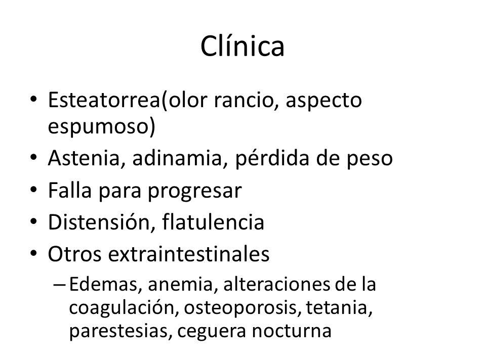 Clínica Esteatorrea(olor rancio, aspecto espumoso)
