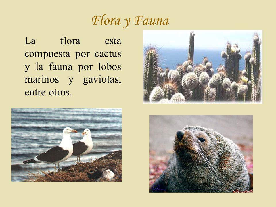 Flora y Fauna La flora esta compuesta por cactus y la fauna por lobos marinos y gaviotas, entre otros.