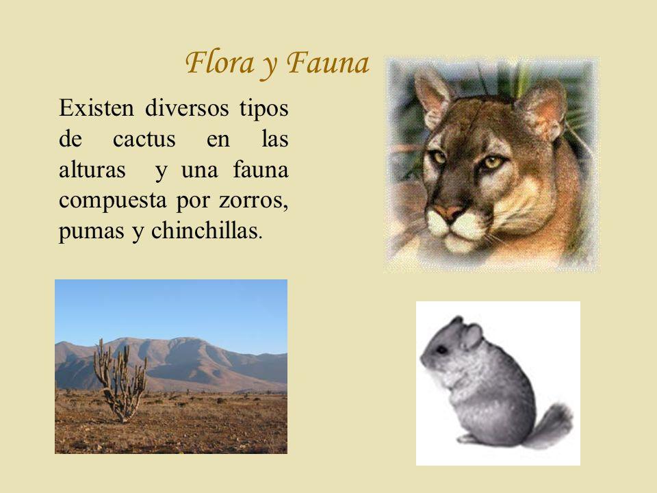 Flora y Fauna Existen diversos tipos de cactus en las alturas y una fauna compuesta por zorros, pumas y chinchillas.