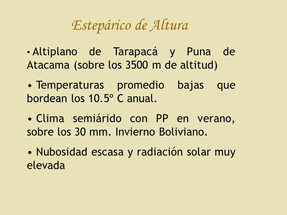 Estepárico de Altura Altiplano de Tarapacá y Puna de Atacama (sobre los 3500 m de altitud)