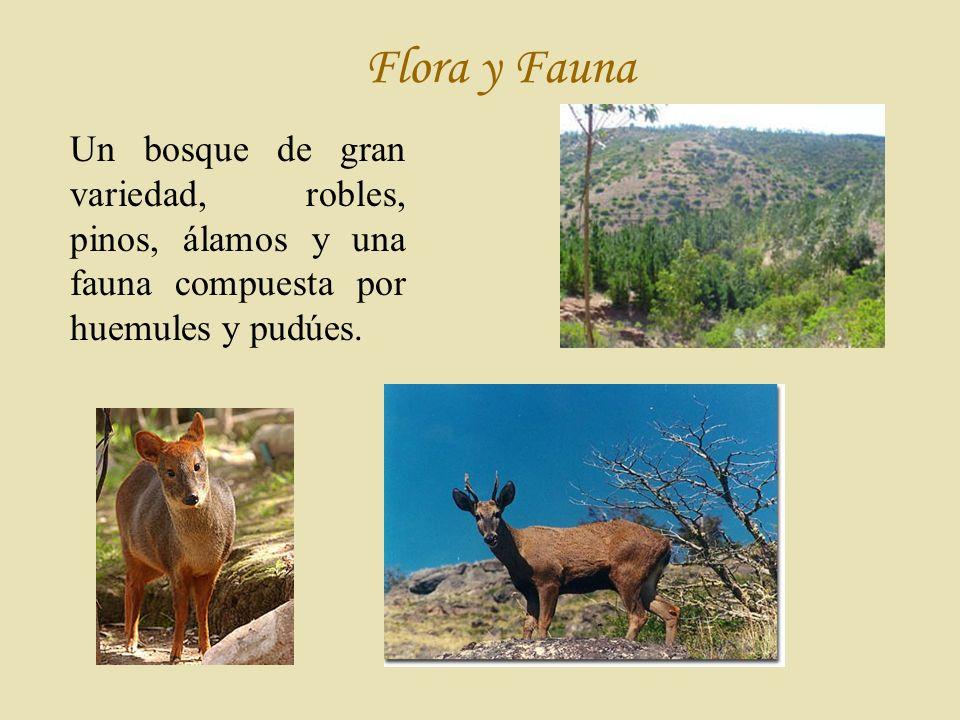 Flora y Fauna Un bosque de gran variedad, robles, pinos, álamos y una fauna compuesta por huemules y pudúes.