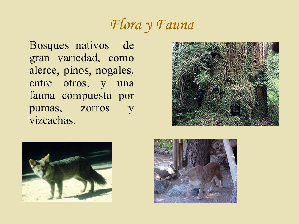 Flora y Fauna Bosques nativos de gran variedad, como alerce, pinos, nogales, entre otros, y una fauna compuesta por pumas, zorros y vizcachas.