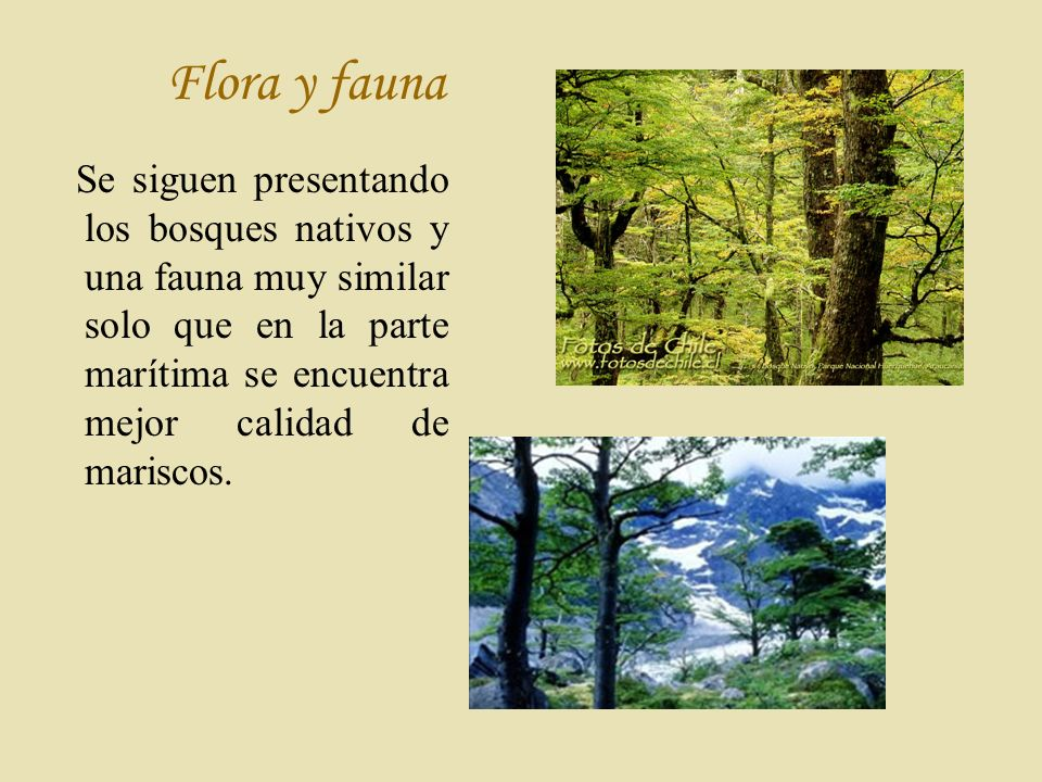 Flora y fauna Se siguen presentando los bosques nativos y una fauna muy similar solo que en la parte marítima se encuentra mejor calidad de mariscos.