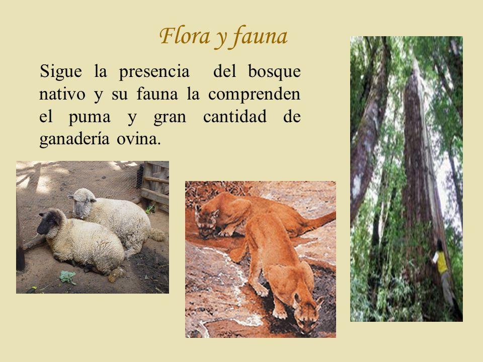 Flora y fauna Sigue la presencia del bosque nativo y su fauna la comprenden el puma y gran cantidad de ganadería ovina.