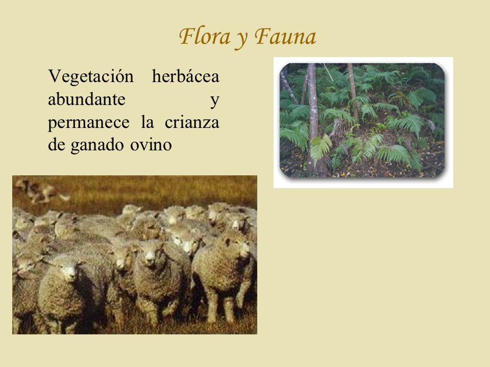 Flora y Fauna Vegetación herbácea abundante y permanece la crianza de ganado ovino
