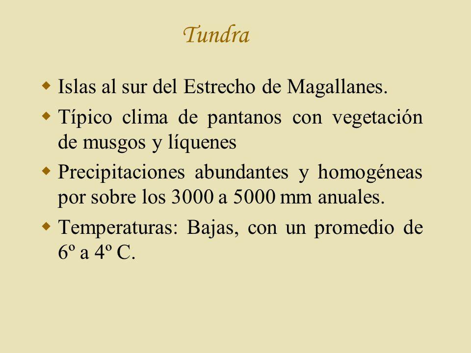 Tundra Islas al sur del Estrecho de Magallanes.