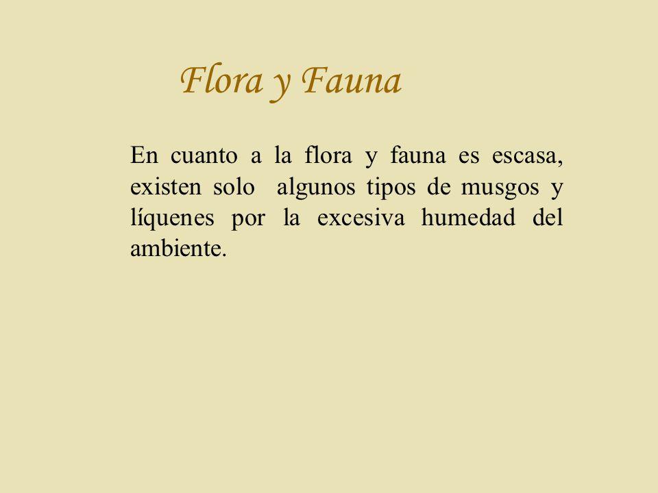Flora y Fauna En cuanto a la flora y fauna es escasa, existen solo algunos tipos de musgos y líquenes por la excesiva humedad del ambiente.