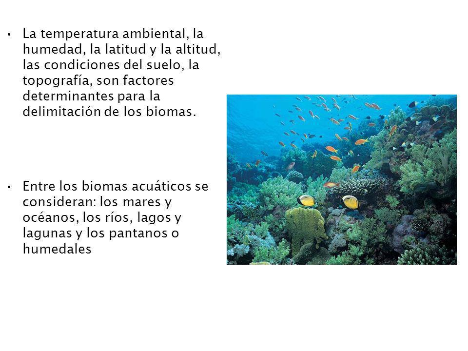La temperatura ambiental, la humedad, la latitud y la altitud, las condiciones del suelo, la topografía, son factores determinantes para la delimitación de los biomas.