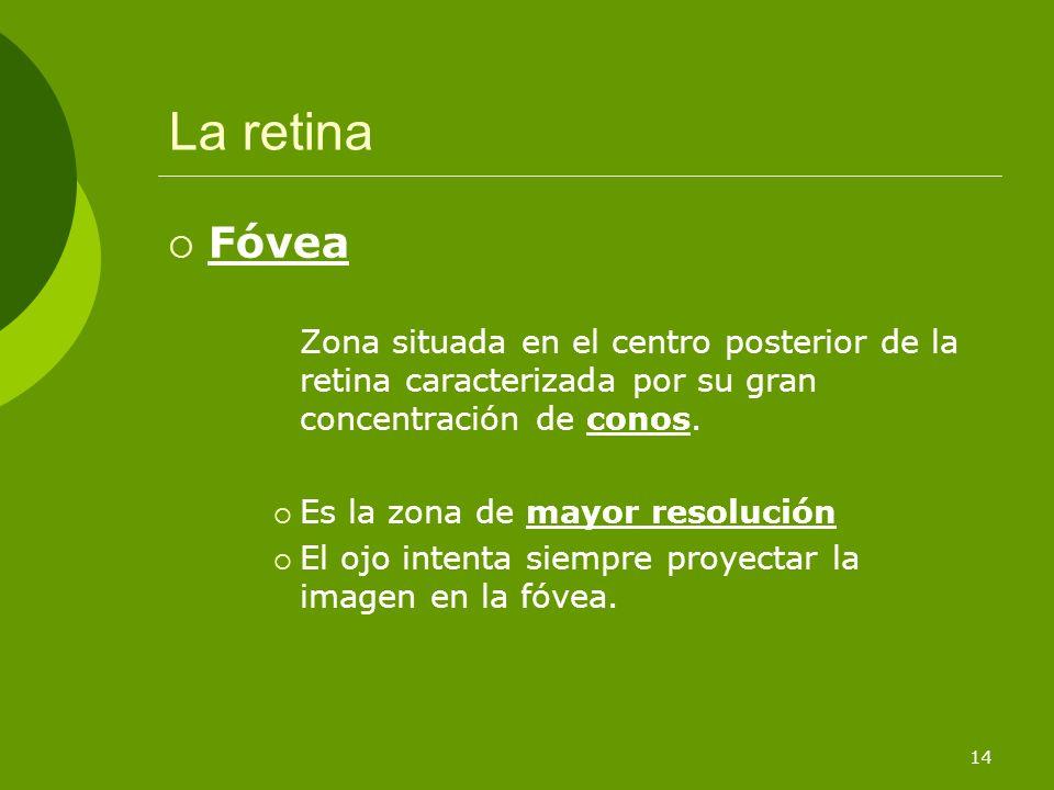 La retinaFóvea. Zona situada en el centro posterior de la retina caracterizada por su gran concentración de conos.