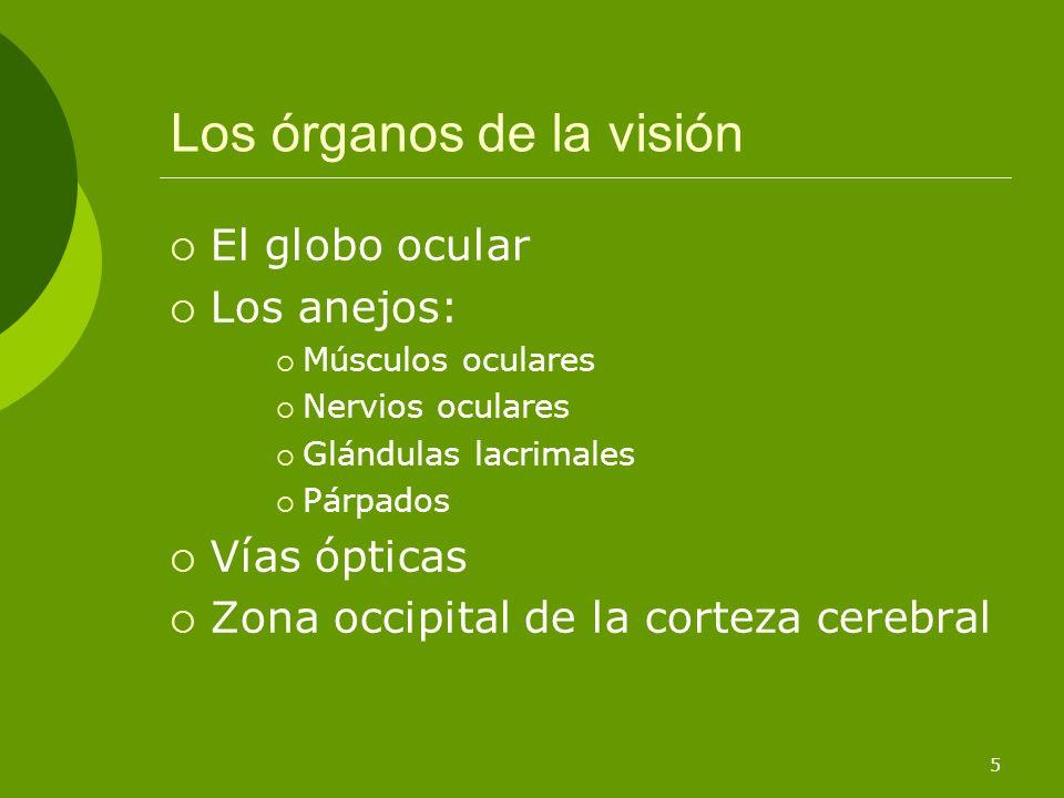 Los órganos de la visión