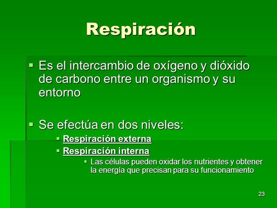 Respiración Es el intercambio de oxígeno y dióxido de carbono entre un organismo y su entorno. Se efectúa en dos niveles: