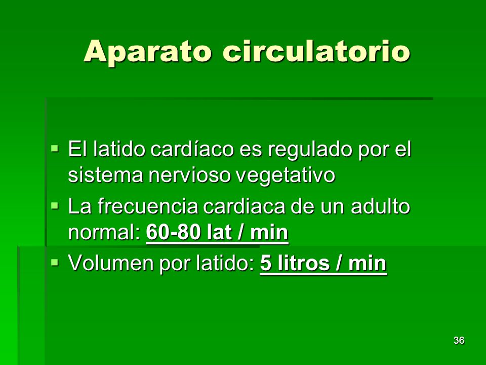 Aparato circulatorio El latido cardíaco es regulado por el sistema nervioso vegetativo. La frecuencia cardiaca de un adulto normal: 60-80 lat / min.