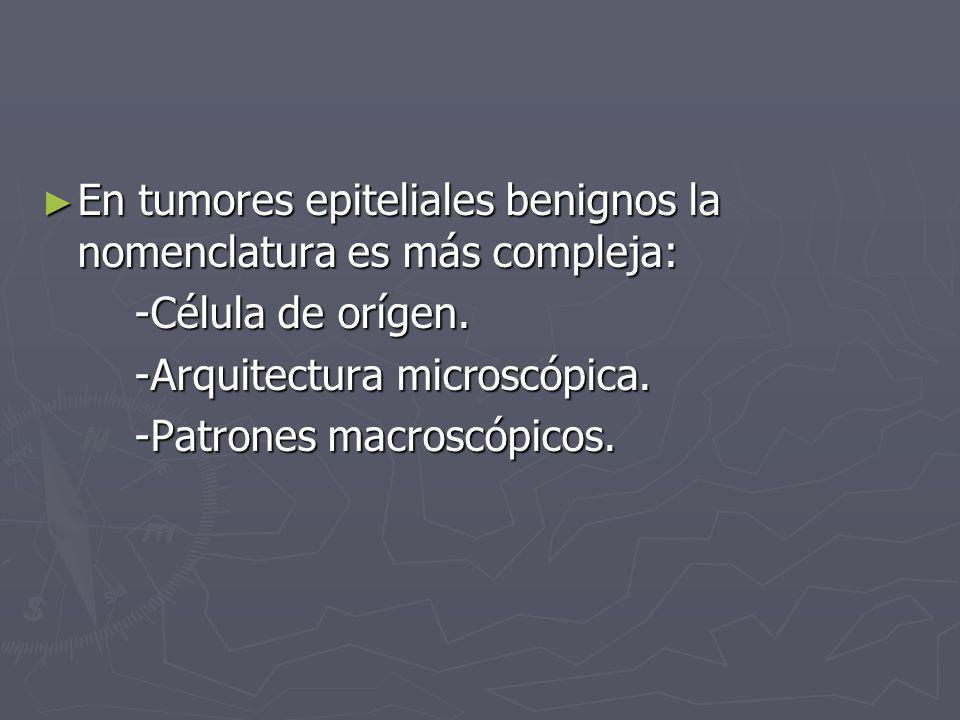 En tumores epiteliales benignos la nomenclatura es más compleja: