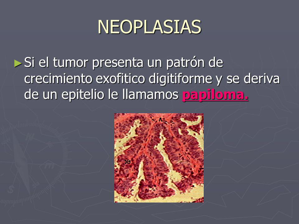 NEOPLASIAS Si el tumor presenta un patrón de crecimiento exofitico digitiforme y se deriva de un epitelio le llamamos papiloma.