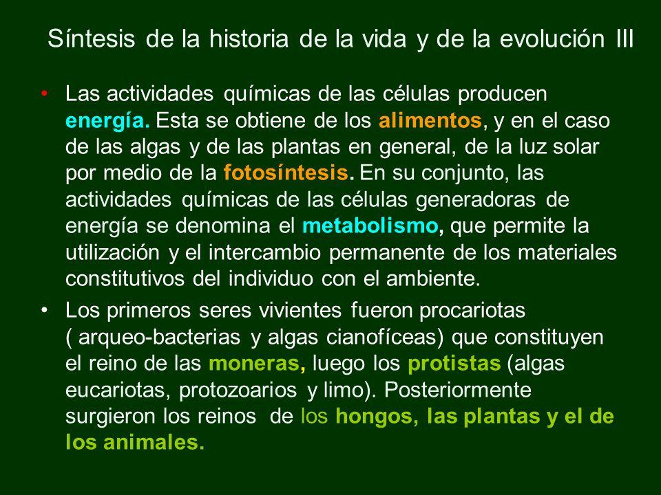 Síntesis de la historia de la vida y de la evolución III