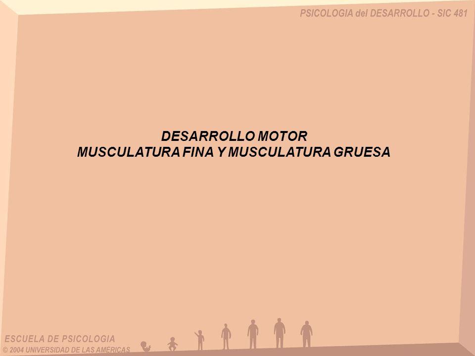 MUSCULATURA FINA Y MUSCULATURA GRUESA