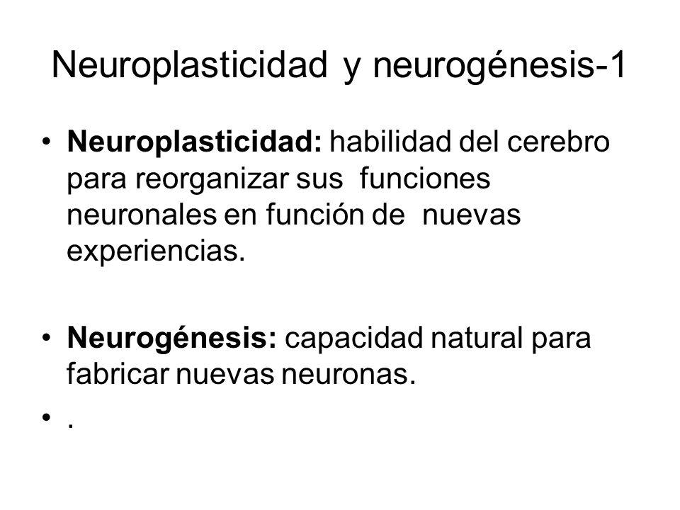 Neuroplasticidad y neurogénesis-1