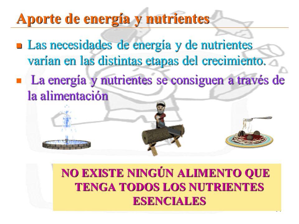Aporte de energía y nutrientes