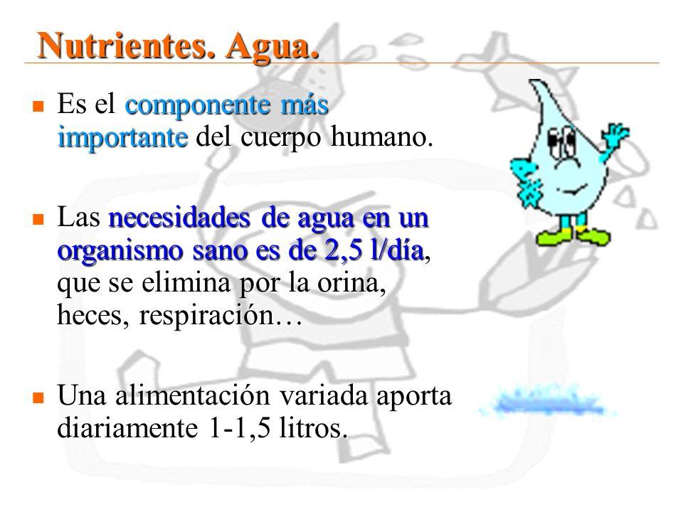 Nutrientes. Agua. Es el componente más importante del cuerpo humano.
