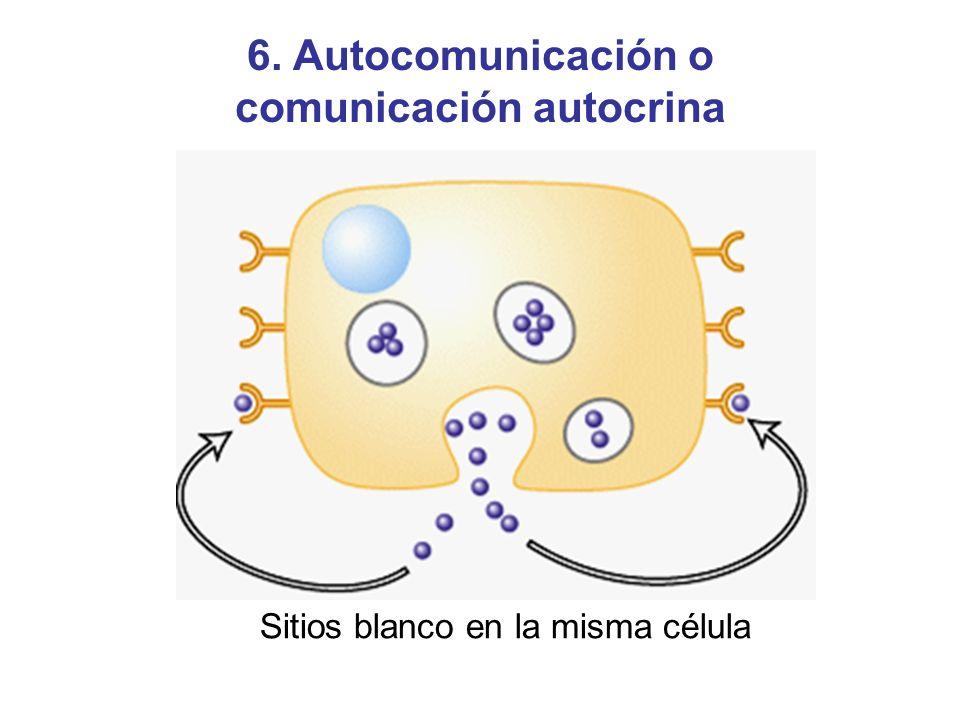6. Autocomunicación o comunicación autocrina