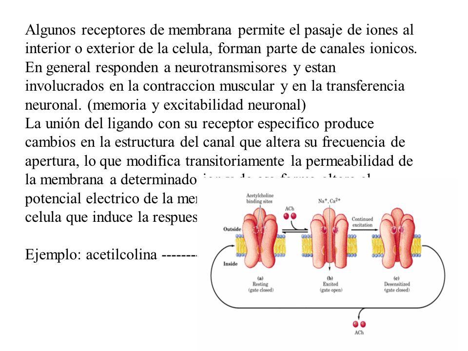 Algunos receptores de membrana permite el pasaje de iones al interior o exterior de la celula, forman parte de canales ionicos.