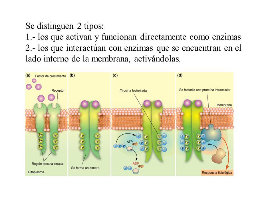 Se distinguen 2 tipos: 1.- los que activan y funcionan directamente como enzimas.