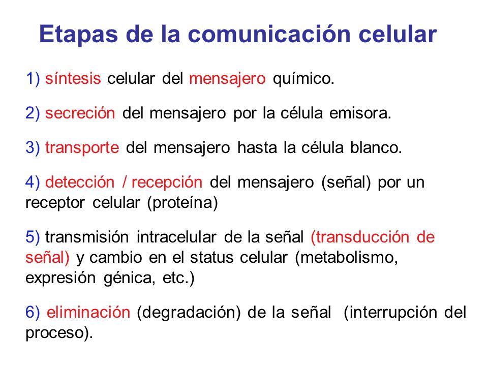 Etapas de la comunicación celular