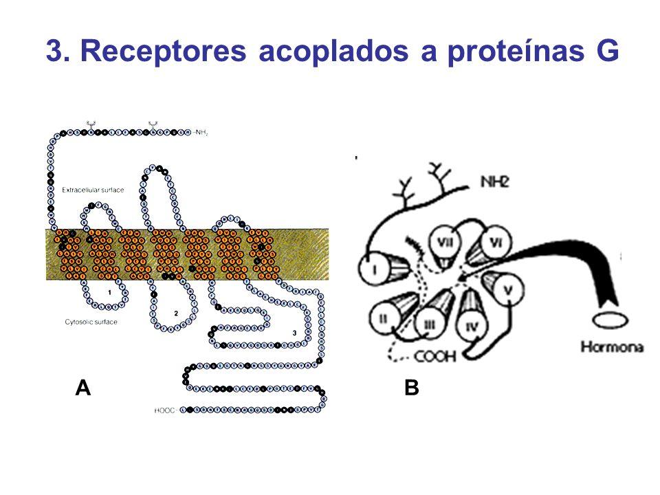 3. Receptores acoplados a proteínas G