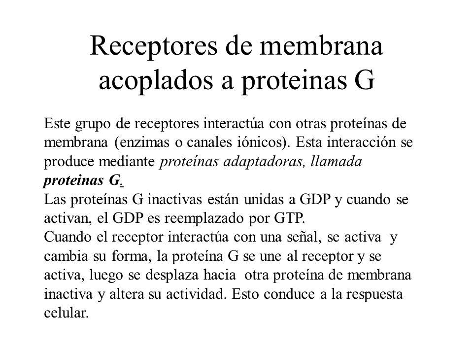 Receptores de membrana acoplados a proteinas G