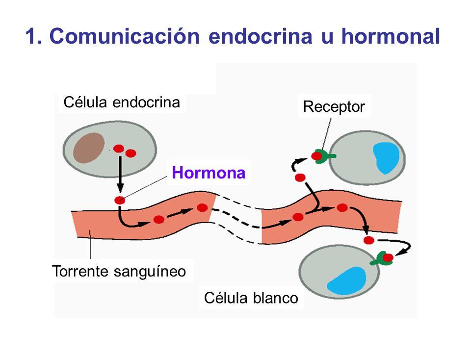 1. Comunicación endocrina u hormonal