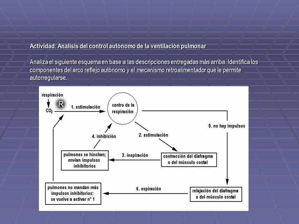 Actividad: Análisis del control autónomo de la ventilación pulmonar