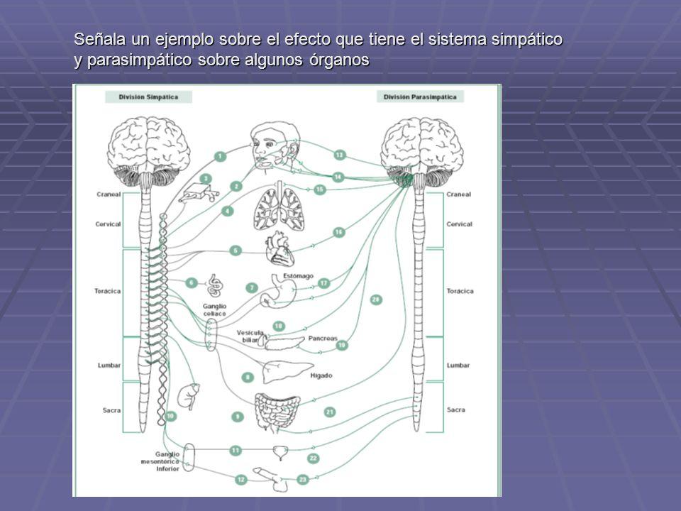 Señala un ejemplo sobre el efecto que tiene el sistema simpático y parasimpático sobre algunos órganos