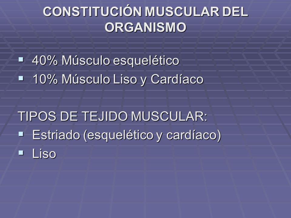 CONSTITUCIÓN MUSCULAR DEL ORGANISMO