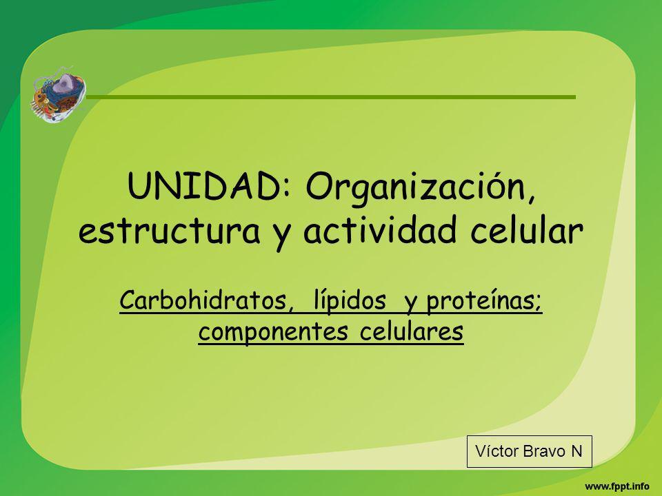 UNIDAD: Organización, estructura y actividad celular